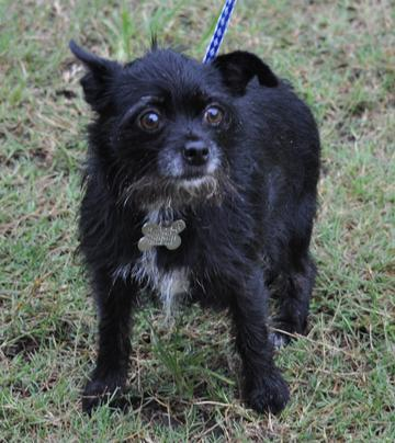 Florida Little Dog Rescue Group - Adoptable Dogs