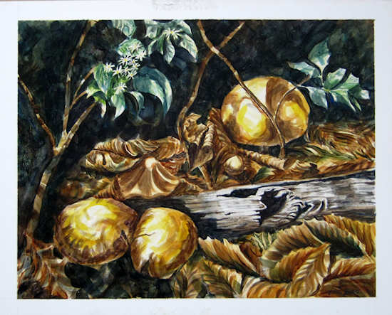 """Mushrooms"" watercolor by John Entrekin"