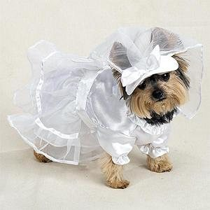 white bride dress with veil dog costume