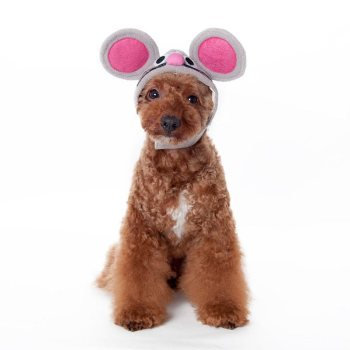 halloween mouse hat for dogs