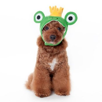 green frog hat for dogs