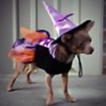 black and orange dress with purple accents and a pointed hat witch costume for dogs