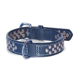 blue dogo stud collar