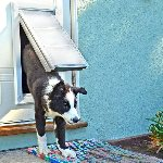 Endura Flap Pet Door for Doors