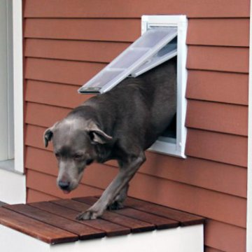 Endura Flap Dog Door For Walls