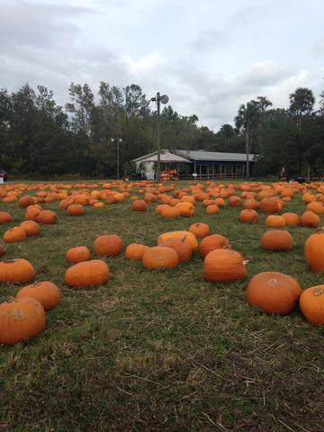 The Great Pumpkin Patch is Over for another Year!